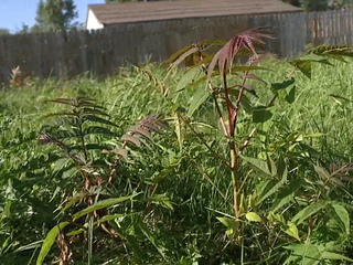 CLE residents complain about uncut vacant lots