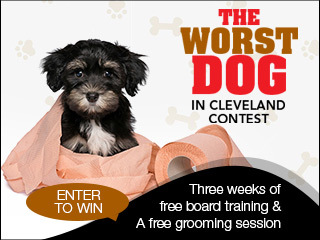 Worst Dog In Cleveland Contest