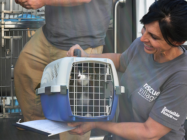 Bangor Humane Society Takes in Dogs Affected by Hurricane Harvey