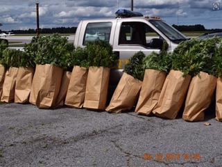 243 marijuana plants seized in Lorain Co.