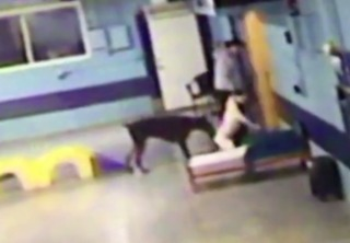 Video shows worker kicking dog at dog daycare