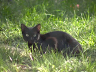 Thousands of feral cats take over city