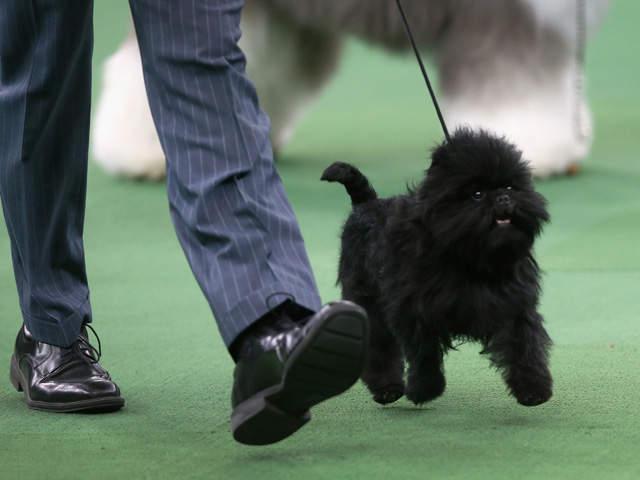 Dog Walker Cleveland