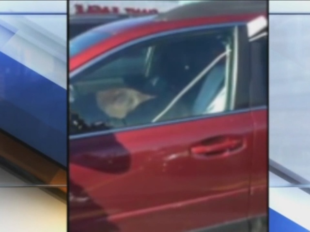 Dog Left In Hot Car Saves