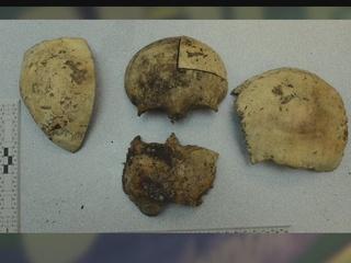 Nearly 80 human bones discovered in barn