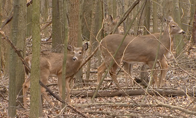 Some ohioans want fees raised for hunting and fishing for Ohio one day fishing license