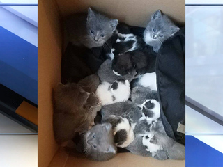 Cats airlifted from shelters hit by hurricane