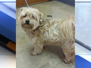 Dog stolen from Richland County shelter