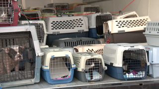 Animals displaced by Hurricane land in Ohio