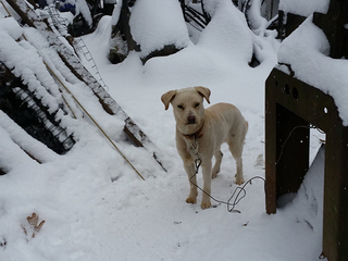 Dogs rescued from freezing temperatures