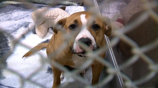 Dogs left in cold abandoned homes in Summit Co.