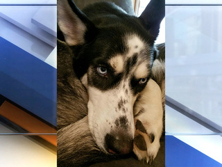 Man allegedly shoots dog that attacked his puppy