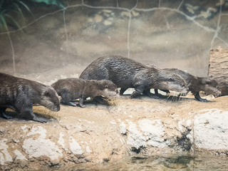 Zoo announces interesting names for otter pups