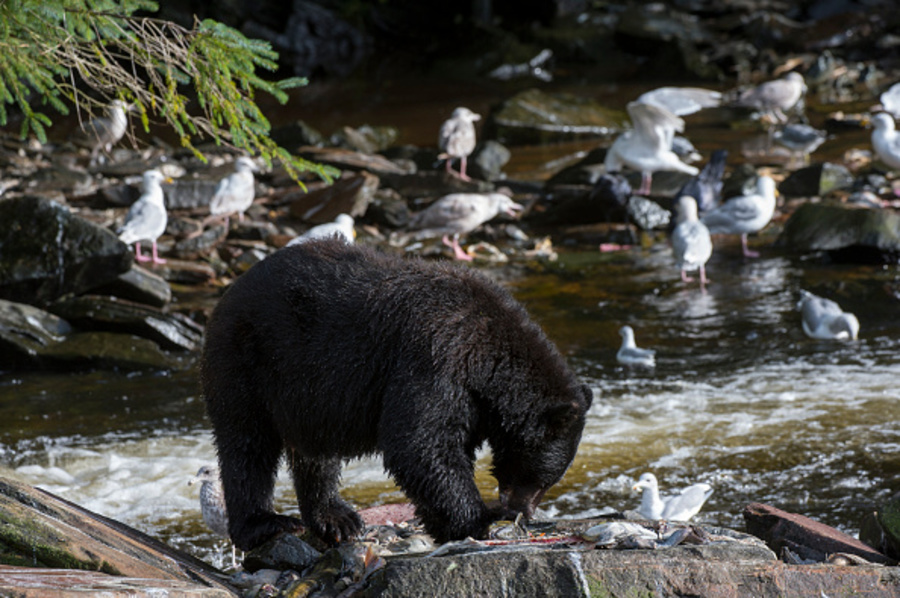 Summit County Metroparks confirm black bear sighting