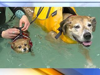 K9 aquatics provides rehab for dogs