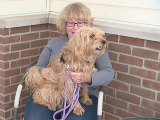 Runaway dog leads to woman's rescue from ditch