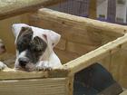 Legislators crack down on puppy mill problems