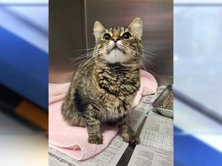 $18K reward offered for info on injured cat