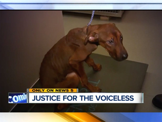 Exploring the legal loophole of animal abuse