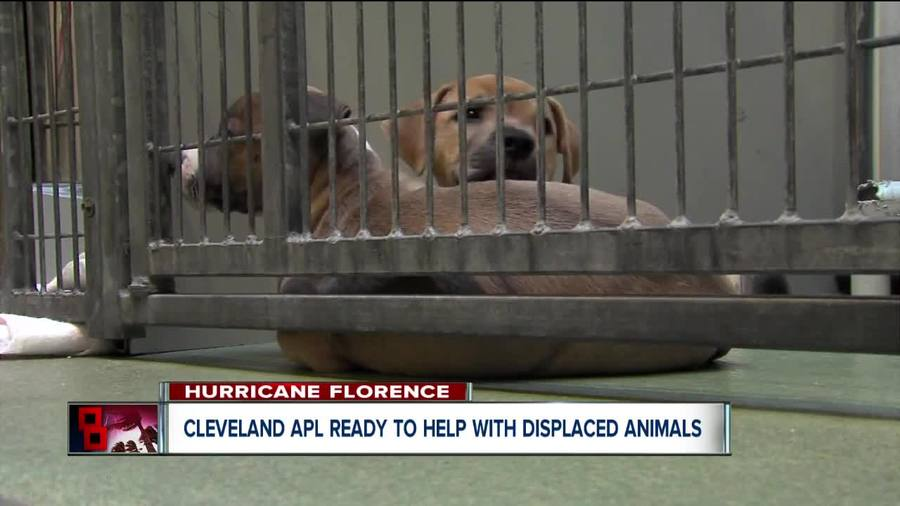 Cleveland APL on standby to take in displaced animals from hurricane-stricken ar...