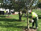 Arborists, veterans spruce up national cemetery