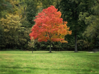 Why you're not seeing fall colors right now