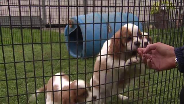 Ohio has a puppy mill problem