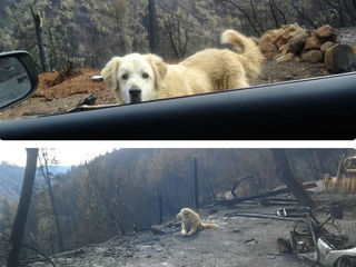 Family's dog found safe after weeks in wildfires